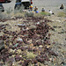 Can Dump (0522)