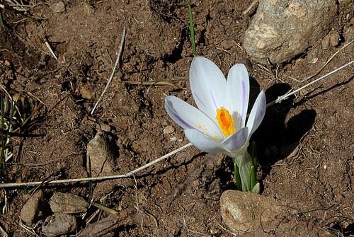 Taupinière fleurie