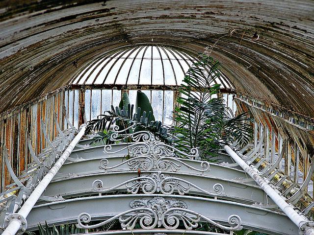 Victoriana oxidata