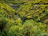 Serra da Estrela, brooms