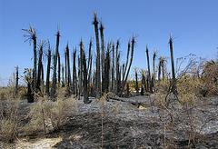 Dos Palmas Fire (7736)