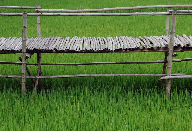 Bambus Bridge