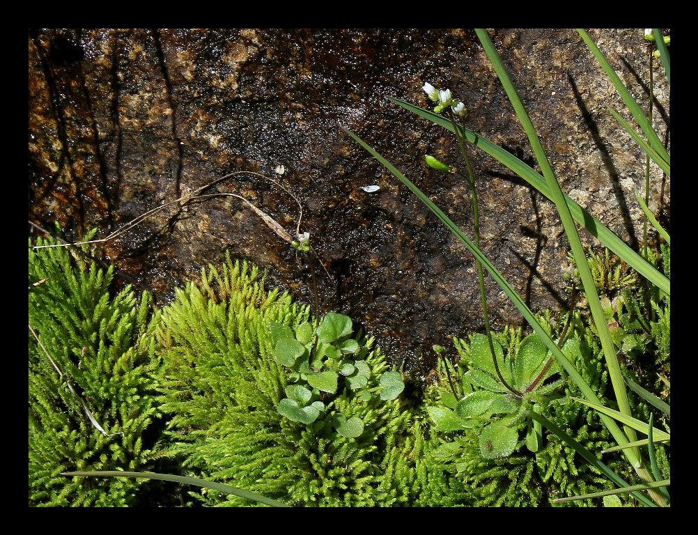 Source de montagne - Sur granite