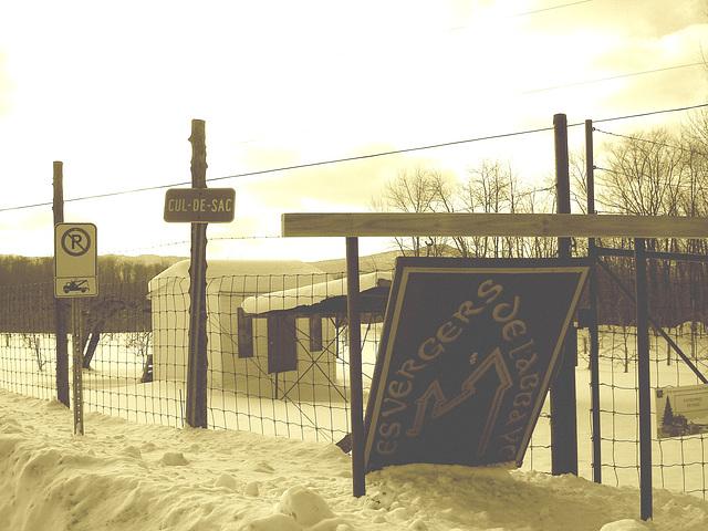 Les vergers de l'abbaye  /  Abbey's orchards -  St-Benoit-du-lac  QC- CANADA.  7 février 2009 - Sepia