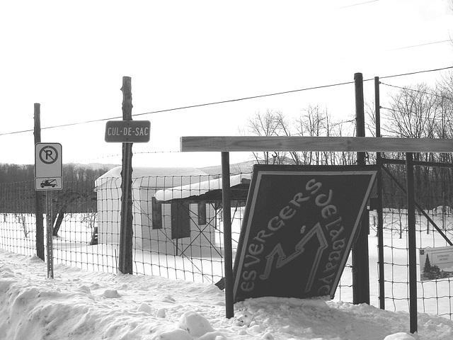 Les vergers de l'abbaye  /  Abbey's orchards -  St-Benoit-du-lac  QC- CANADA.  7 février 2009-  B & W