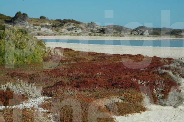 salt lake at Rottnest