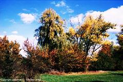 Beginning of Fall, Picture 15, Milichovsky Les, Haje, Prague, CZ, 2007