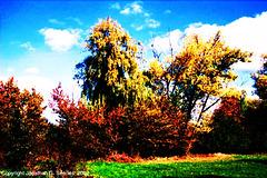 Beginning of Fall, Picture 15 High Saturation Edit, Milichovsky Les, Haje, Prague, CZ, 2007