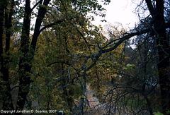 Fall Colors, Strelecky Ostrov, Prague, CZ, 2007