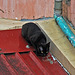 Roof Cat