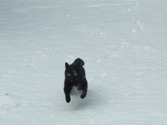 Tippi stretching her legs in the snow