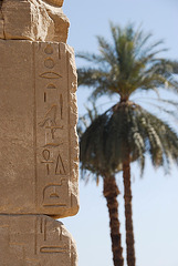 Palm Trees & Ancient Writing