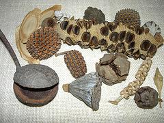 Einige Samen aus Australien