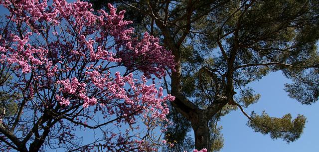Provence au printemps