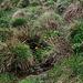 Prairie tourbeuse- Joncs - Populage