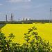 Rapsfeld vor der Teutonia Zementfabrik / field with rape