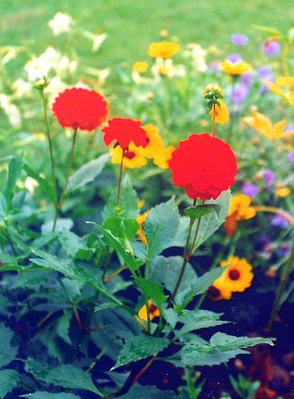 Floroj el la Goetoĝardeno en Vajmaro