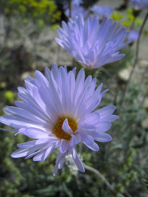 Flower (0738)