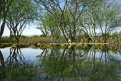 Sunnylands (4399)