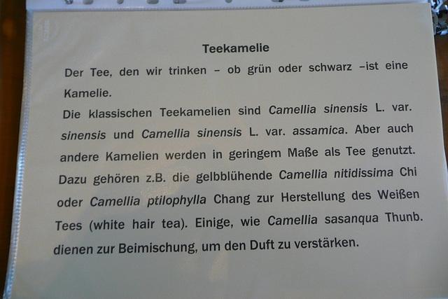 Kamelie - Informationen