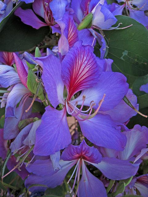 Flower (0691) Lightened A Bit For Identification