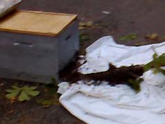 L'essaim dans la ruche 2