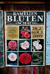 6. Deutsche Kamelienblütenschau im Barockschloß Zuschendorf - 2009