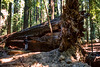 Redwood National Park - 1