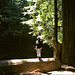 Redwood National Park - 2