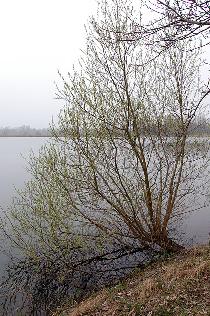 arbo sur lago - Baum auf dem See