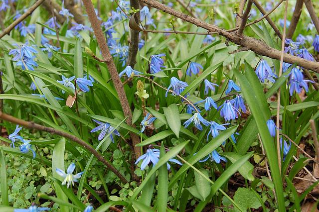 Floras kaj floras... es blüht und blüht