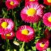 Floropovo - Flowerpower