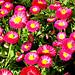 Floropovo 2 Flowerpower 2