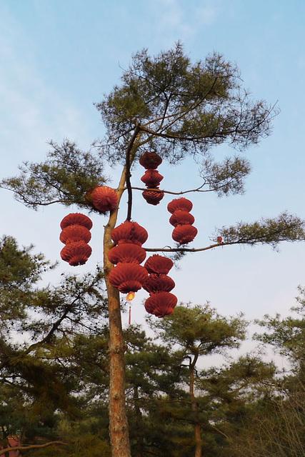 Lanterns on Pine