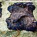 Giganto kaj amatino, dekstre nigrulo