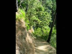 Impressionen einer Wanderung durch die Angustiasschlucht auf  LA PALMA