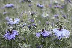 Blumen pflücken im Regen