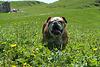 Le petit Bully dans la prairie