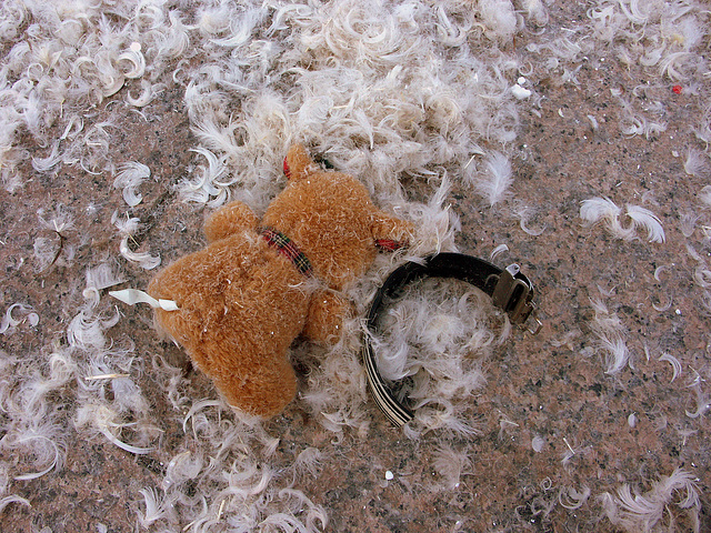 abused teddy