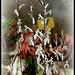 Collection d'Haworthia - Floraisons (3)