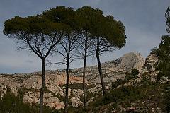 Les 4 pins et la Sainte-Victoire