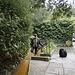 Chalice Well - Glastonbury - 20130409