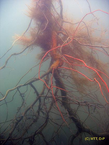 Underwater-Tree II