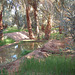 Oasis de Timimoun, Algérie