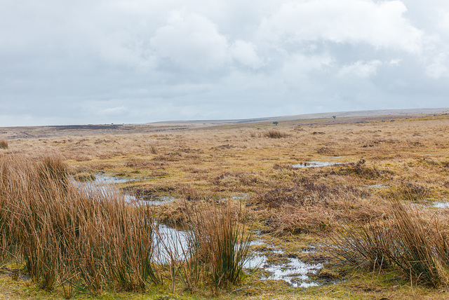 Dartmoor - 20130412