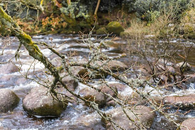 River Dart - Dartmoor - 20130412