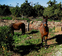 Algarve, Silves (area), talking to