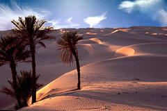 quand les dunes avancent
