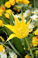 yellow - jaune - gelb