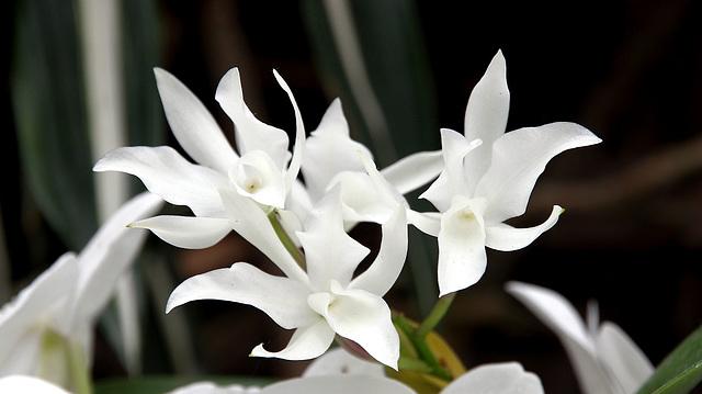 white - blanc - weiss